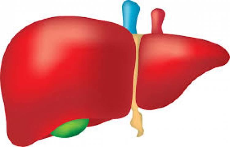 Karaciğer Yağlanması Nedir? Karaciğer Temizliği Nasıl Yapılır?-1